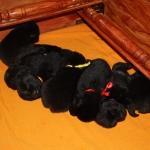 pups 14 days.1