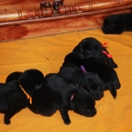 pups 14 days