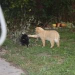 сука 2 м с котом.1