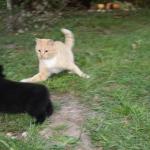 сука 2 м с котом