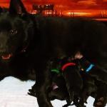 Mashalla with pups born