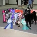 Sargiz prizes