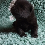 availible male 14 days